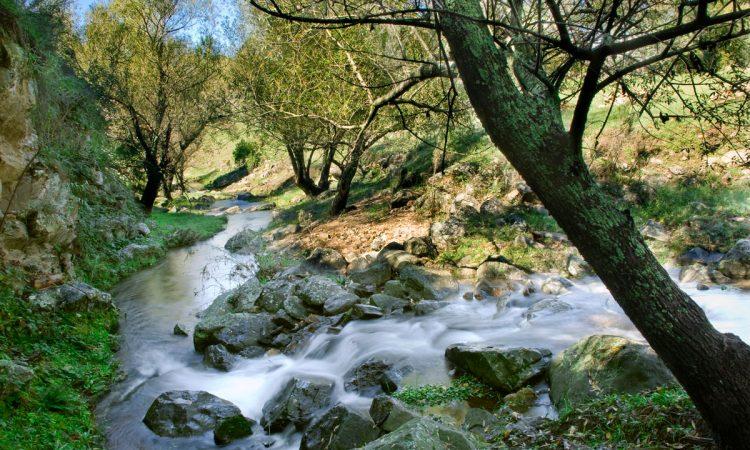 Arroyo en el bosque de la Posada Loma del Tigre