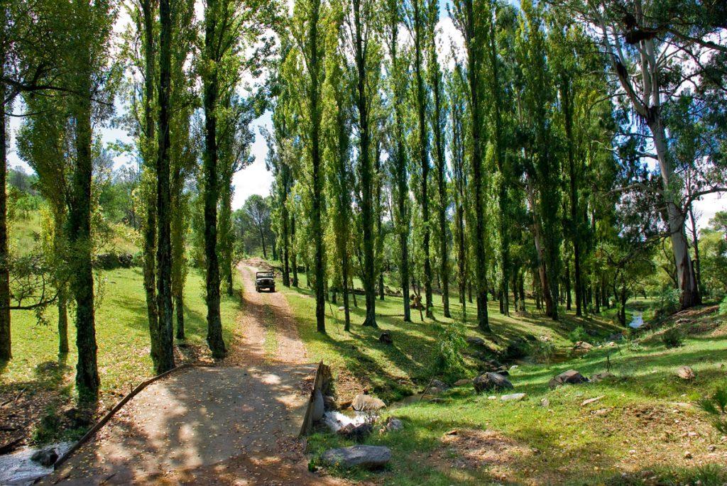Caminos arbolados en la Posada Loma del Tigre